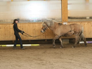 It´s the season for halter training weanlings